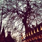 スコットランドでは木がすごくかっこよかった。貫禄がすごい。
