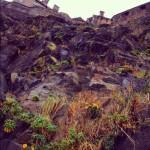 崖の下にタンポポ咲いてる。